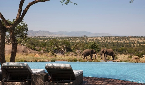 Four Seasons Serengeti - Photo #12