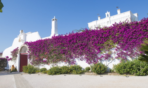 Masseria Torre Coccaro - Photo #10