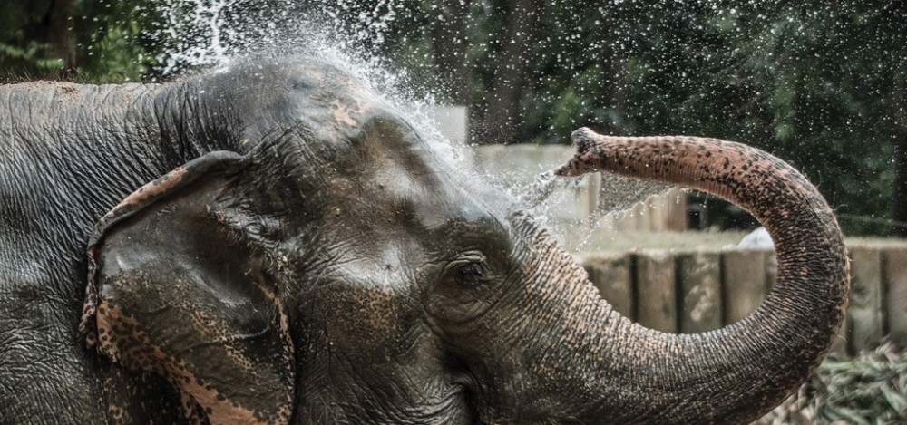 Iloveelephants - Photo #1