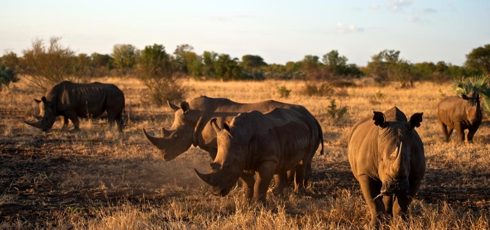 The Travel + Leisure World's Best Safari - Photo #5