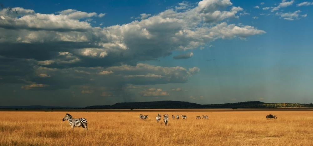 The Travel + Leisure World's Best Safari - Photo #4